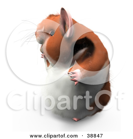 Clipart Illustration of Hammy The Jester Hamster Wearing A Hat And.