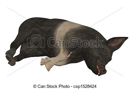 Drawing of hampshire pig lying down isolated on white background.