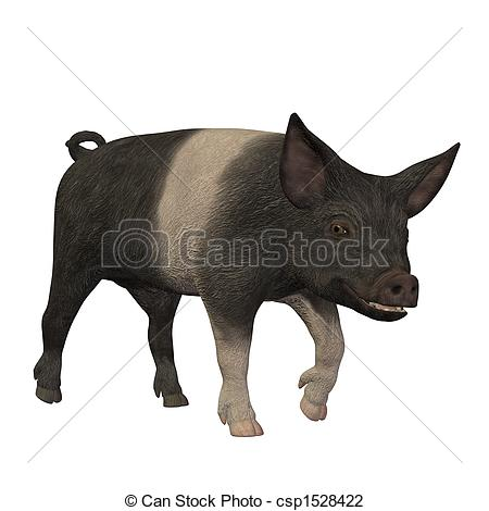 Clip Art of hampshire pig standing isolated on white background.