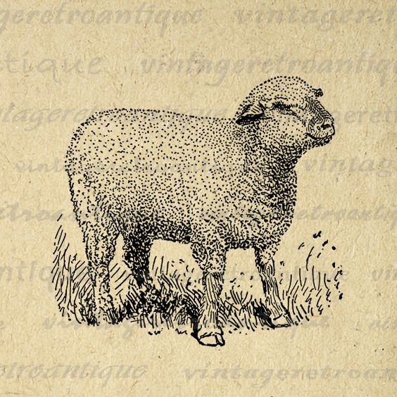 Little Hampshire Sheep Graphic Image Download Cute Lamb Printable.