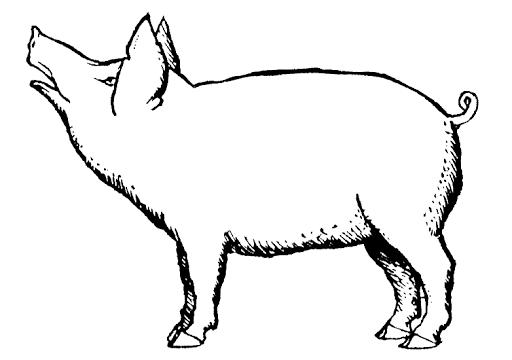 Hampshire Pig Clipart.