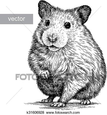 Engrave hamster illustration Clip Art.