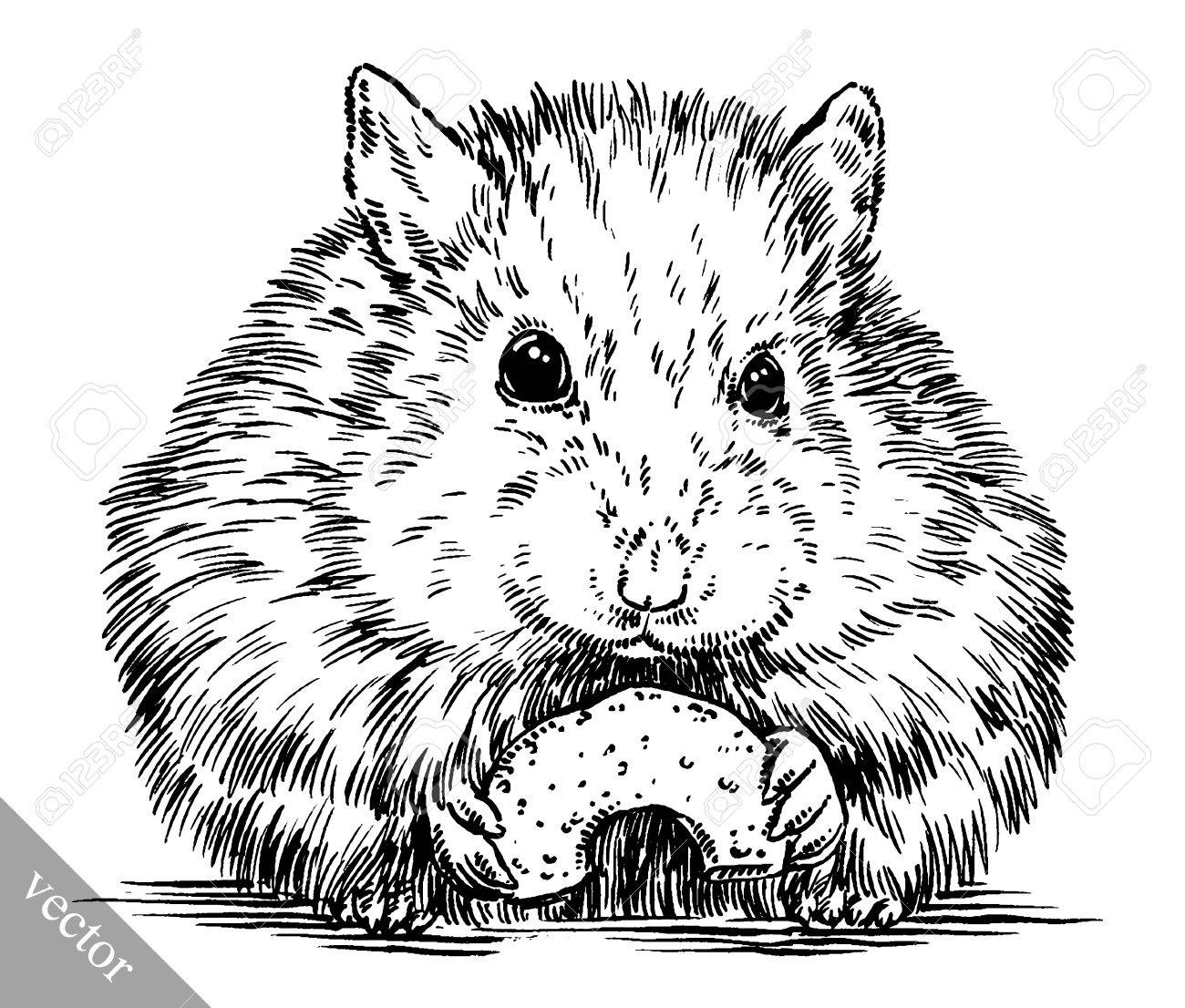 black and white engrave ink draw vector hamster illustration.