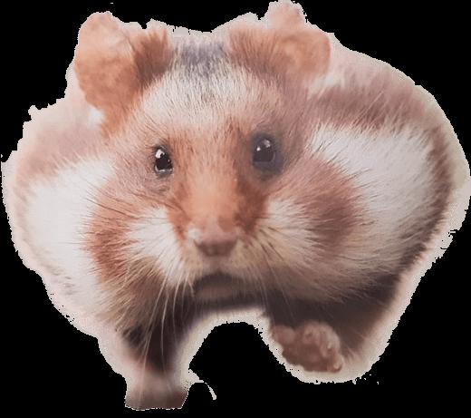 Running Hamster Transparent PNG Image #300.