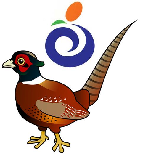 City Bird: Hanam's Pheasant in Pheasants, City Birds.