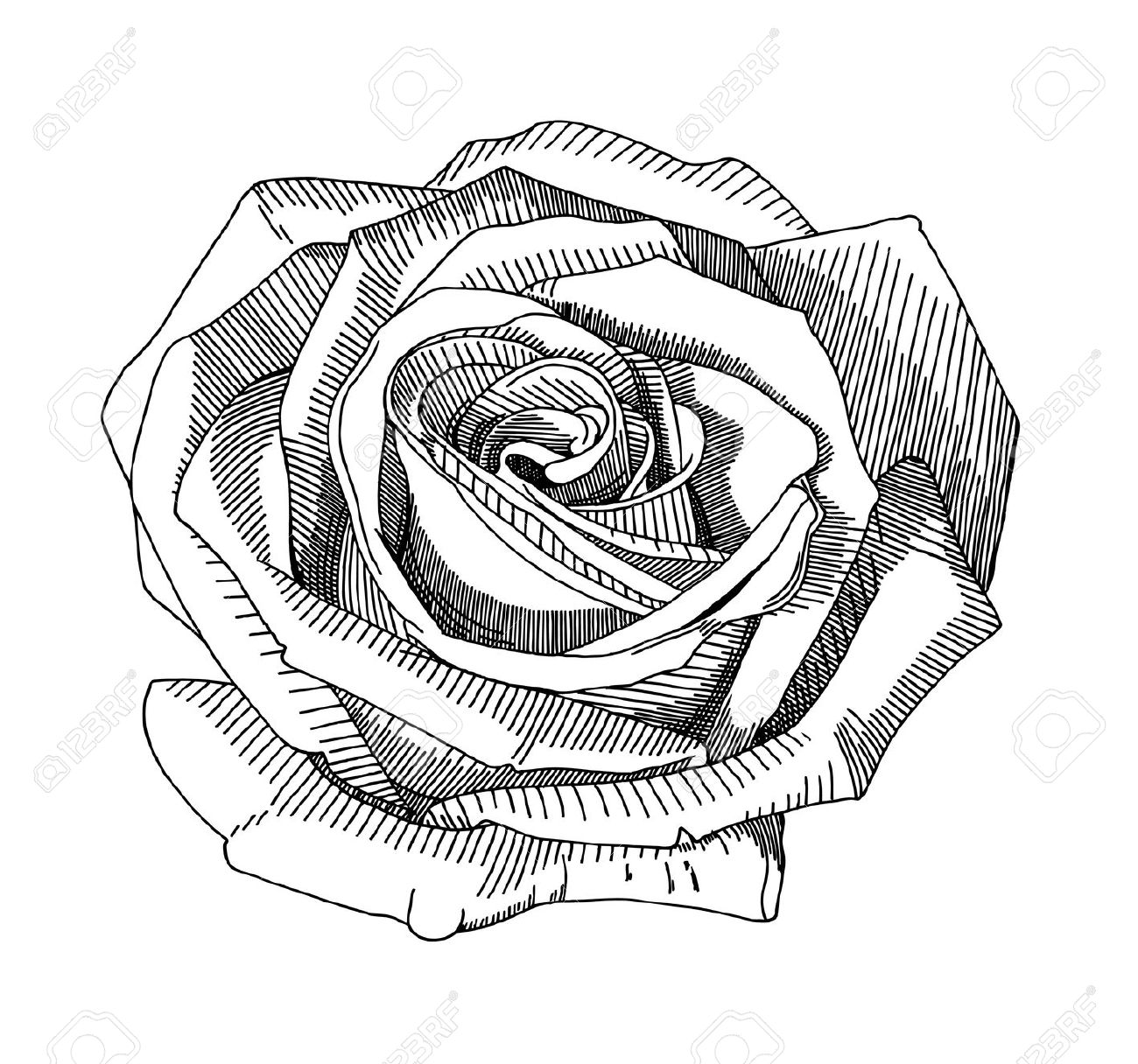 Hand Draw Sketch Rose Royalty Free Cliparts, Vectors, And Stock.