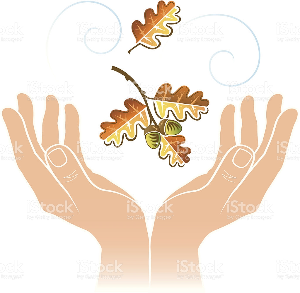Cupped Hands Oak Leaf stock vector art 165737107.