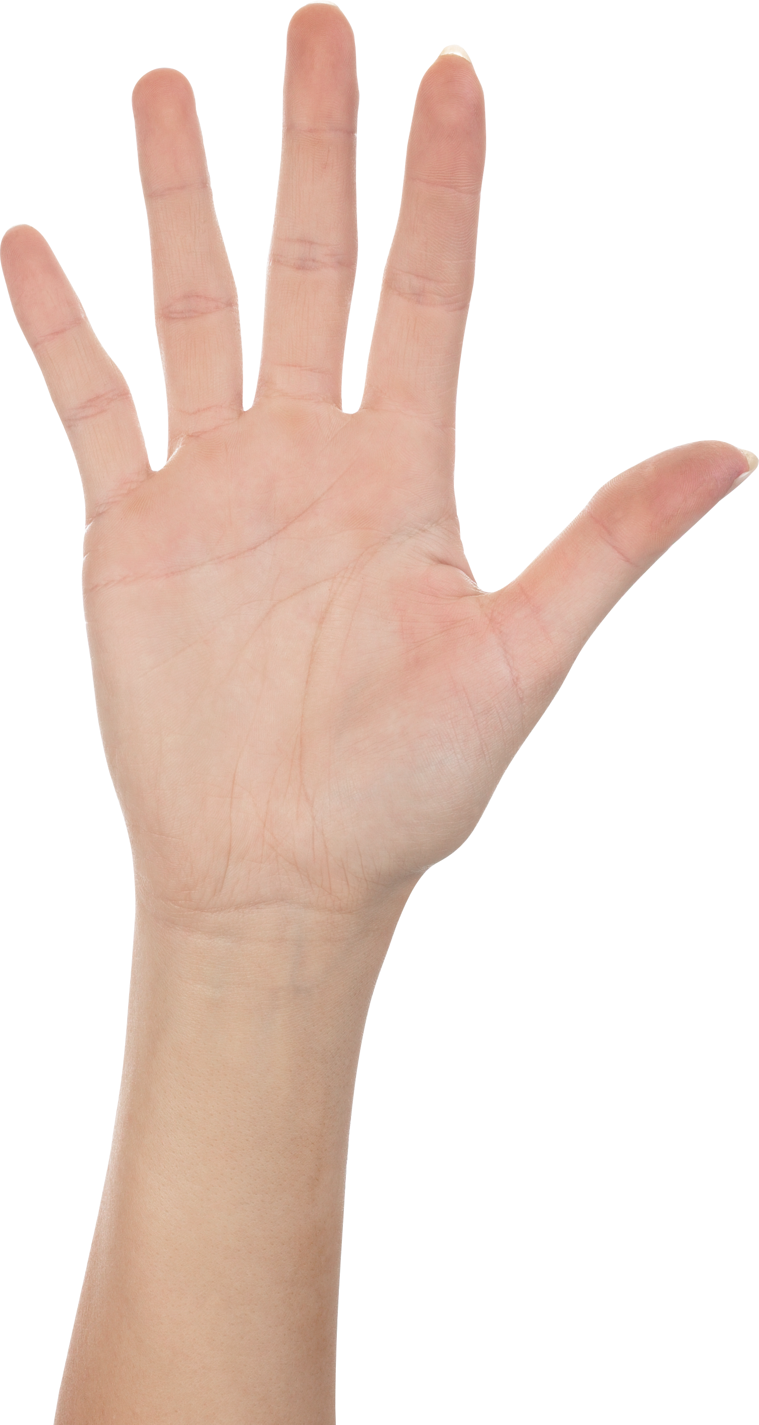 Five Finger Hand PNG Image.