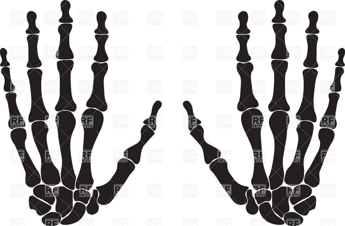 Silhouettes of hand bones Vector Image #34734.