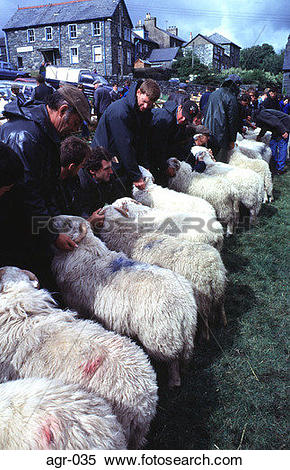 Stock Image of Handlers with Rams in a Row at a Country Fair UK.