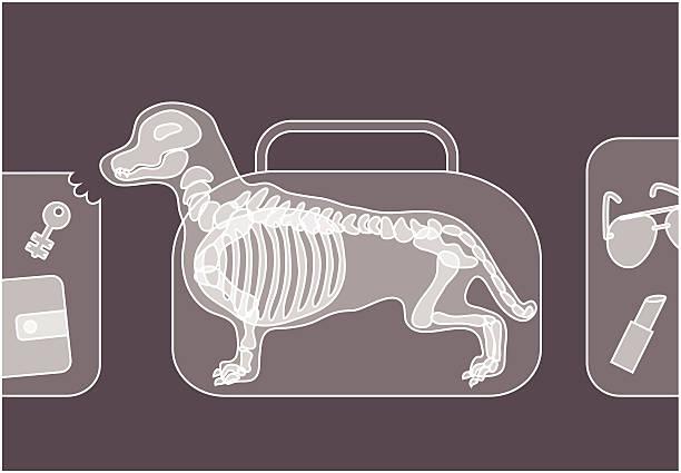 Baggage Handlers Clip Art, Vector Images & Illustrations.