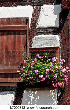Stock Photo of Hanging basket of pink geraniums in a window of an.