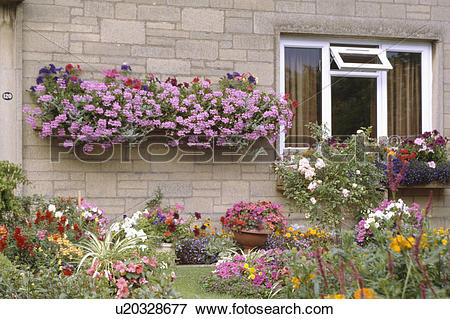 Picture of Pink geraniums in hanging baskets on wall of seventies.