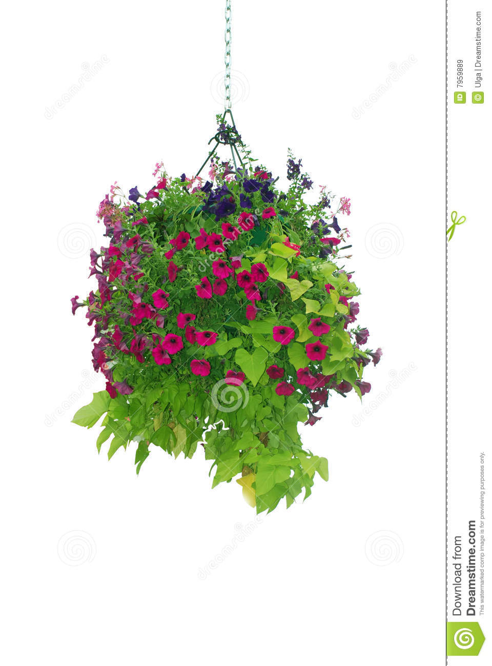 Flowers For Baskets For Hanging : Hanging basket clipart clipground