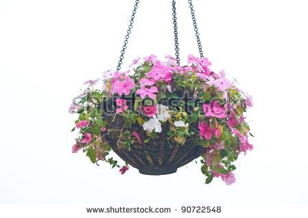 Hanging Basket Of Flowers Isolated On White Background Stock Photo.