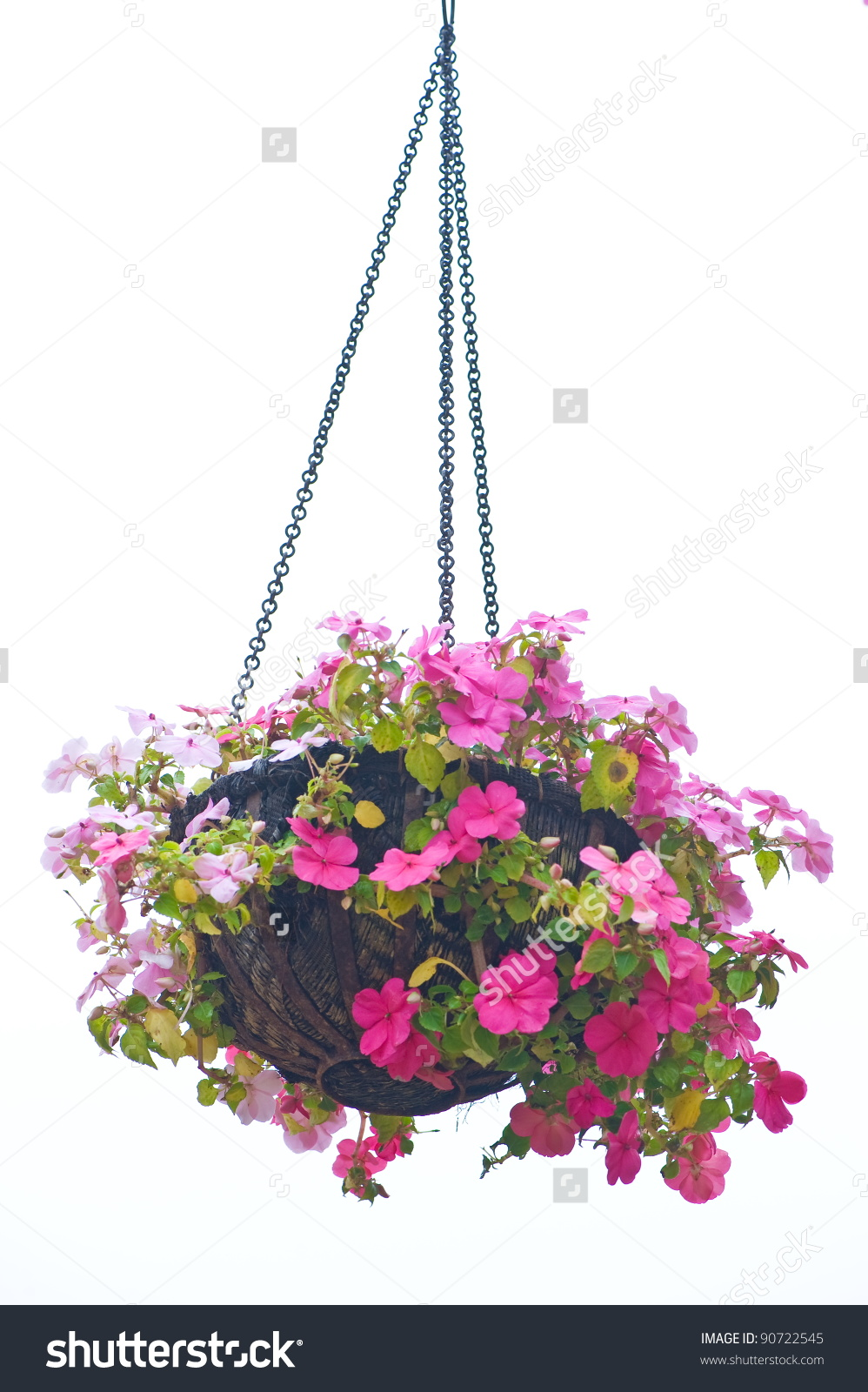 Salad Container Garden Front Web additionally Umbrella X also Hanging Basket Clipart furthermore Dragons Love Tacos further Giphy. on lettuce clip art