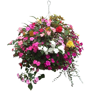 1000+ images about Hanging Baskets on Pinterest.