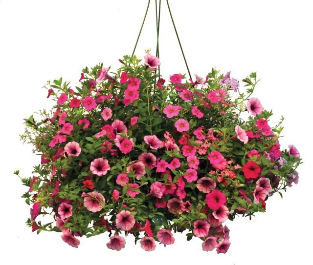 Hanging flower baskets clipart.