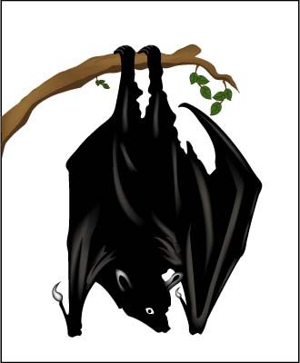 Upside Down Bat Clipart.