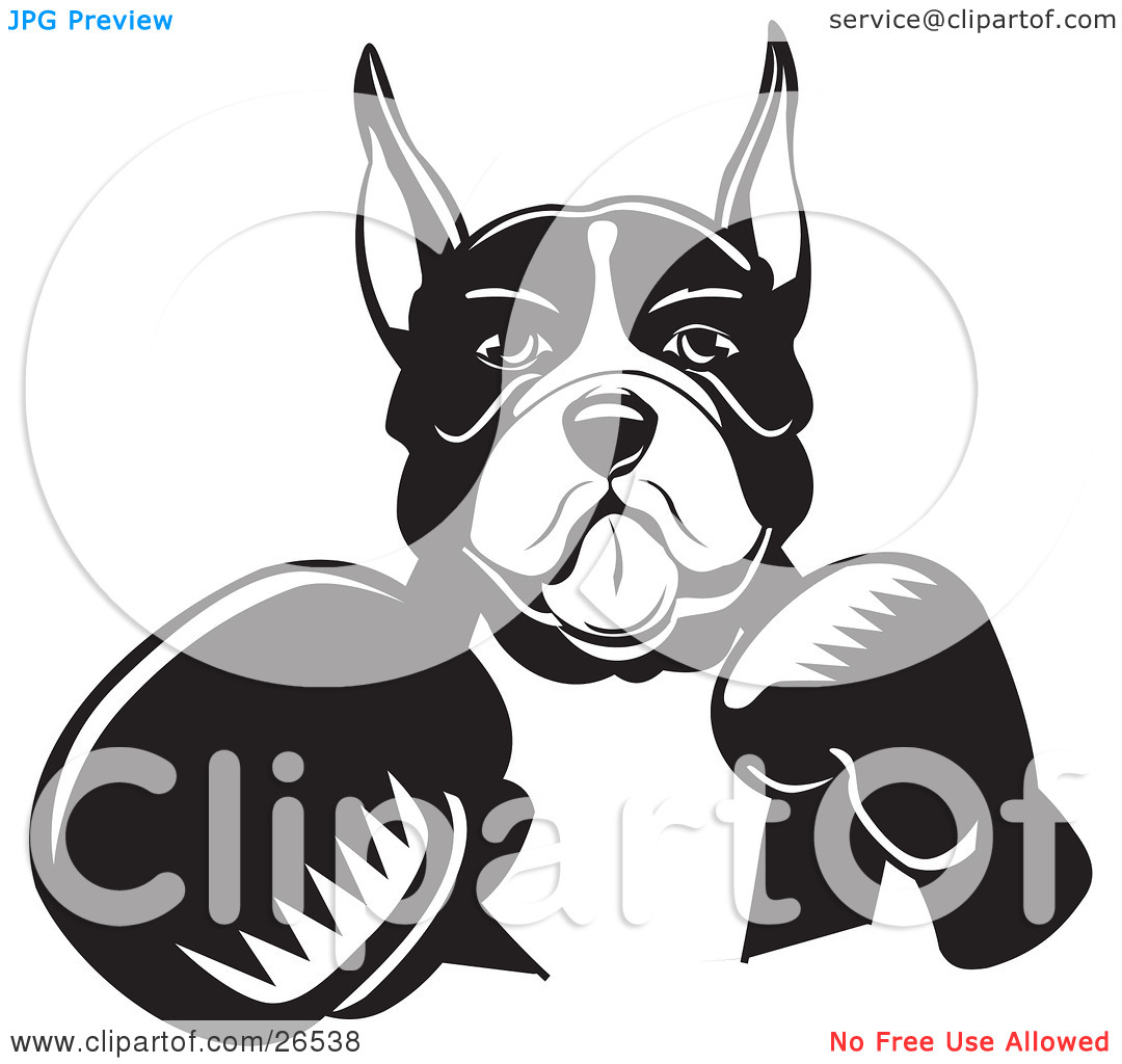 Clipart Illustration of a Boxer Dog With Cropped Ears, Fighting.