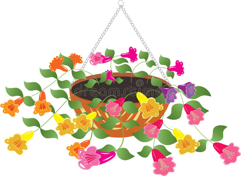 Hanging Flower Basket Stock Illustrations.