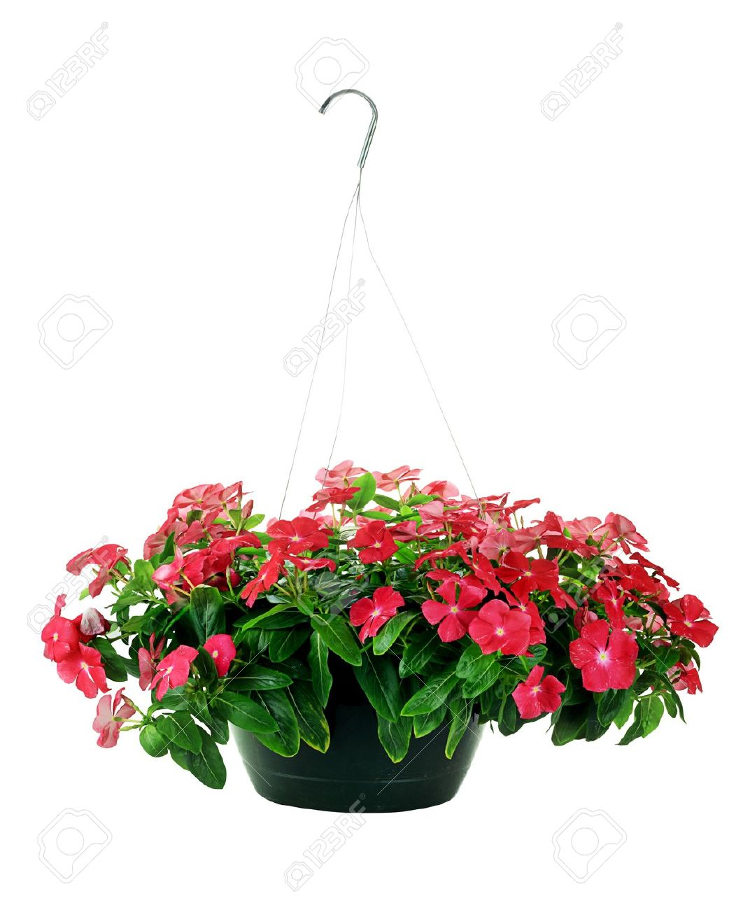 Free Hanging Flower Basket Photos.