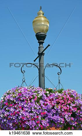 Pictures of Street light with hanging petunia flower baskets.