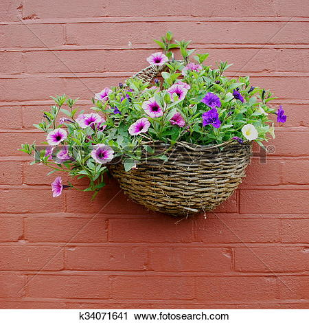 Stock Photography of Hanging basket with petunia k34071641.