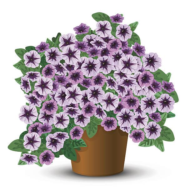 Hanging Petunia Baskets Clip Art, Vector Images & Illustrations.