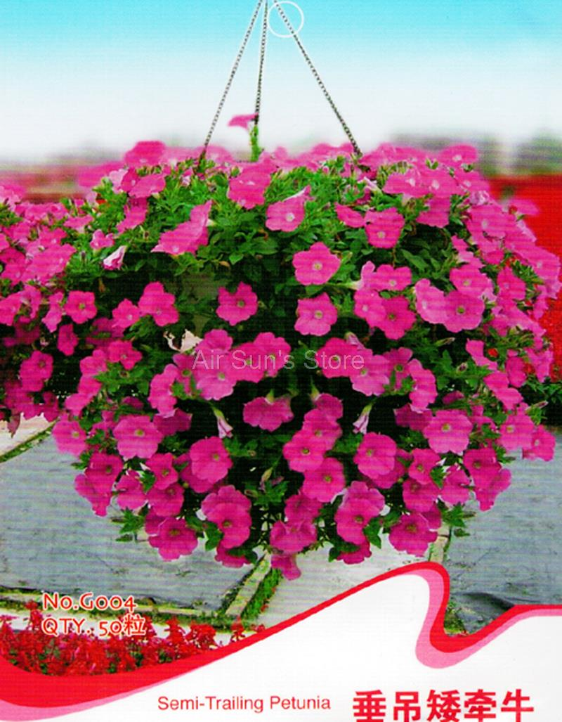plant clip art free Picture.