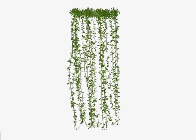 Hanging Plants, Plants Clipart, Plant, Green Plants PNG Transparent.