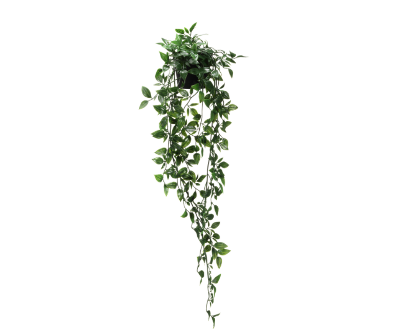 Hanging Plants Png (110+ images in Collection) Page 1.