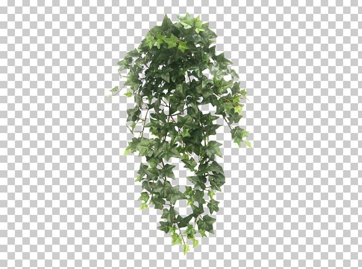 Hanging Basket Houseplant Vine Tree PNG, Clipart, Hanging Basket.