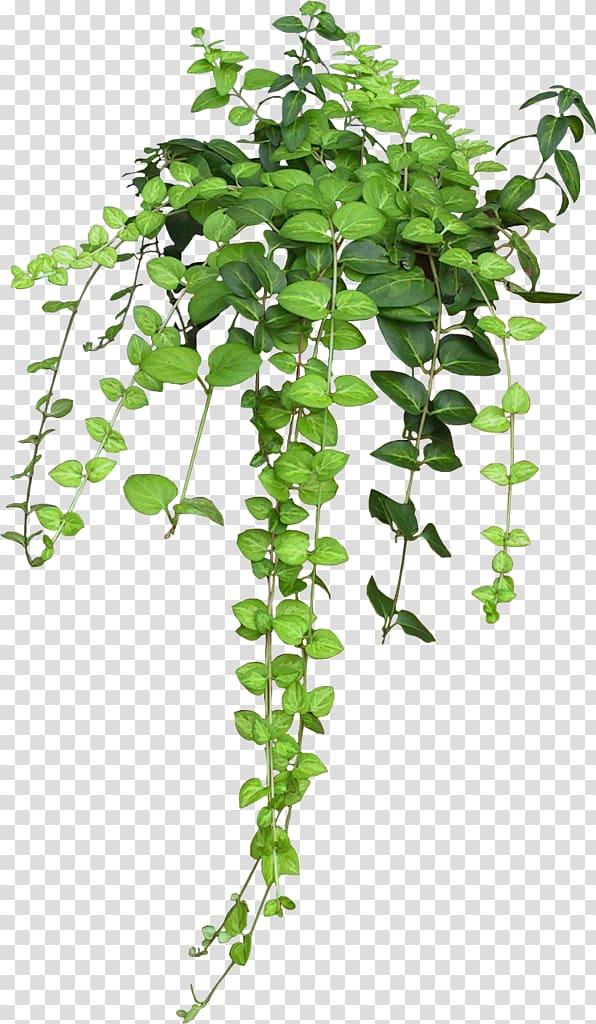 Green leafed plant illustration, Flowerpot Houseplant Hanging basket.