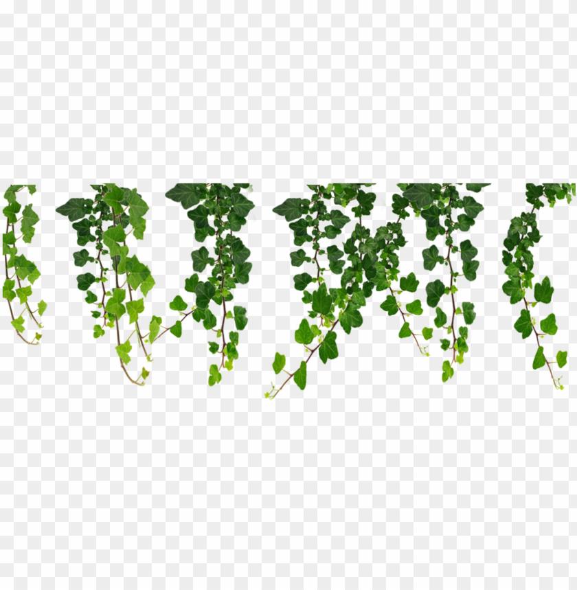 jpg royalty free download hanging vines png by moonglowlilly.