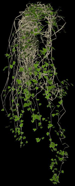 Vines PNG images.