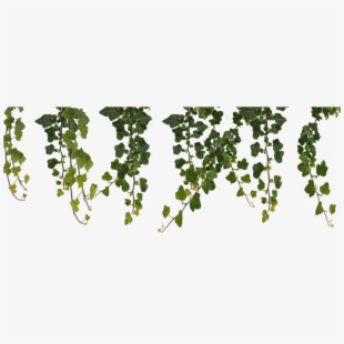 hanging vines png #9