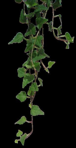 Hanging Vines.
