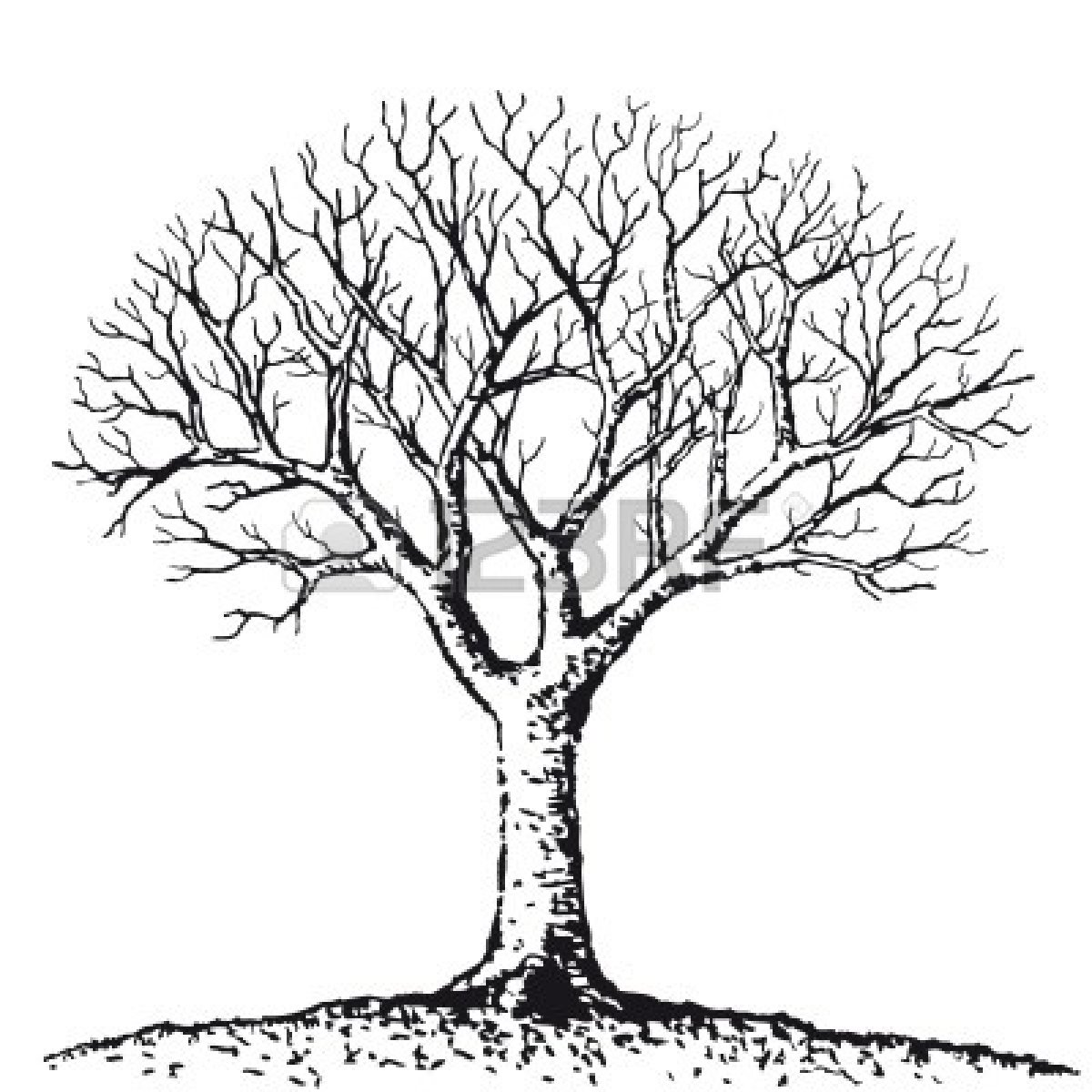 Bare Tree Bare Clipart Panda Images adult.