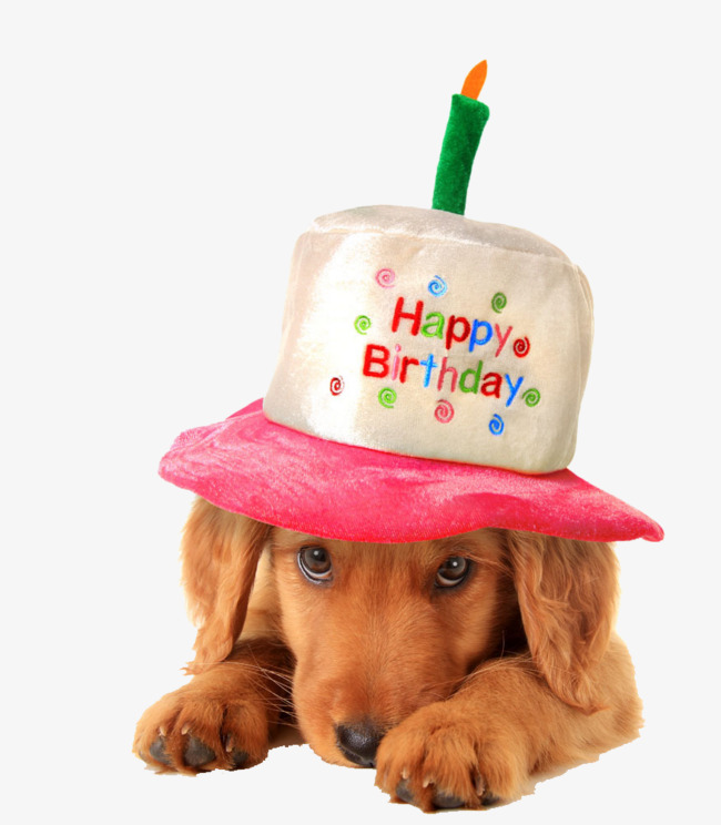 Birthday Dog PNG Transparent Birthday Dog.PNG Images..