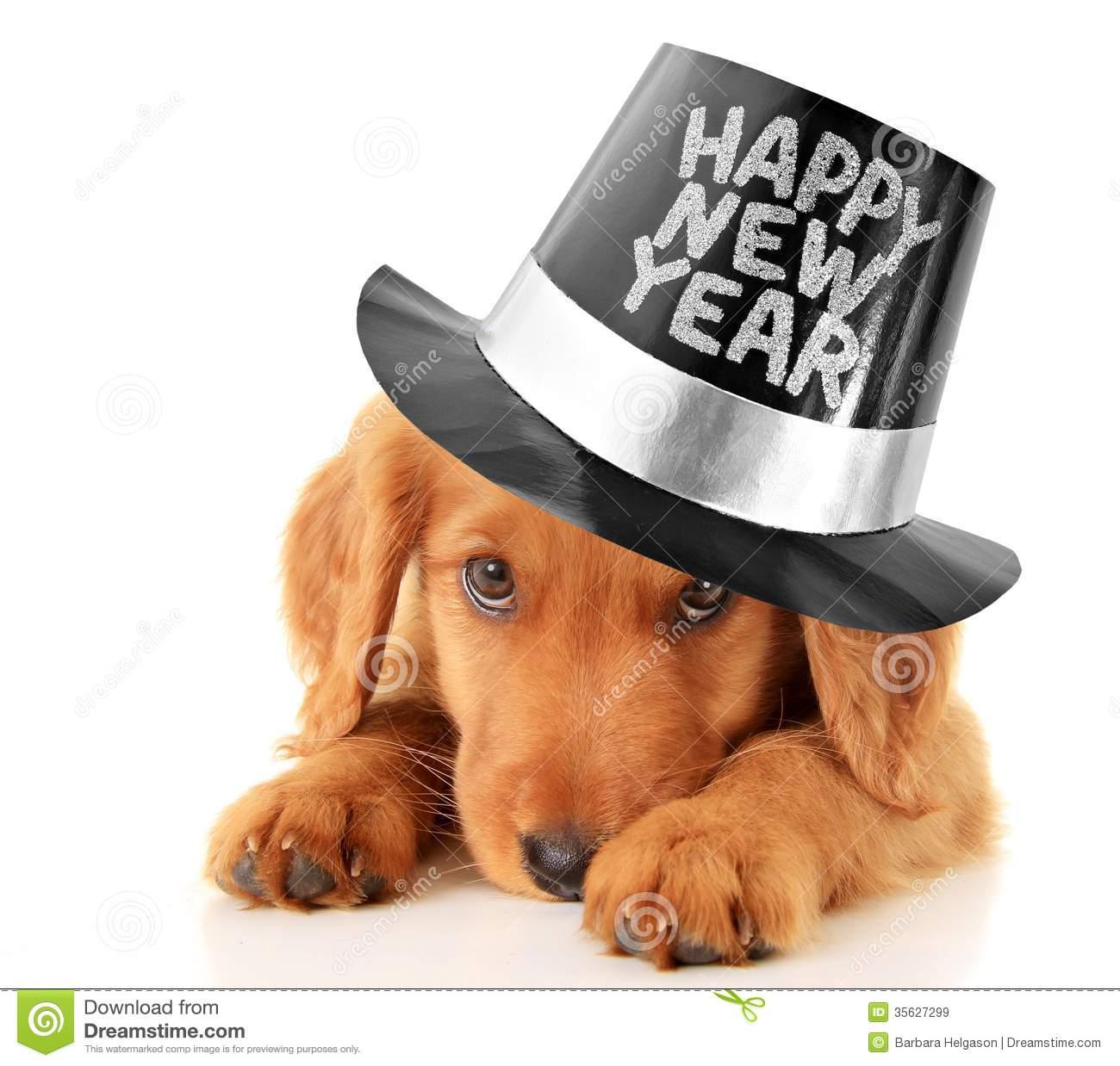 Happy New Year puppy stock image. Image of adorable, studio.