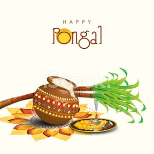 Happy Pongal celebrations with rice in traditional mud pot.