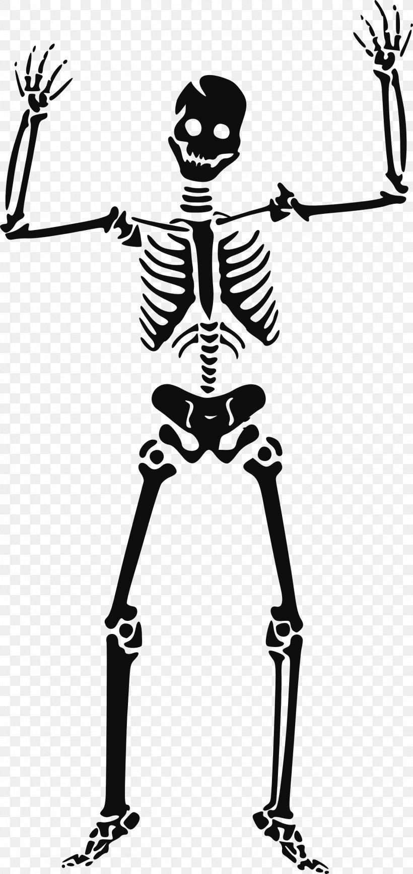 Human Skeleton Clip Art, PNG, 1514x3200px, Skeleton.