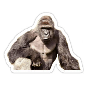 Harambe Sticker transparent PNG.