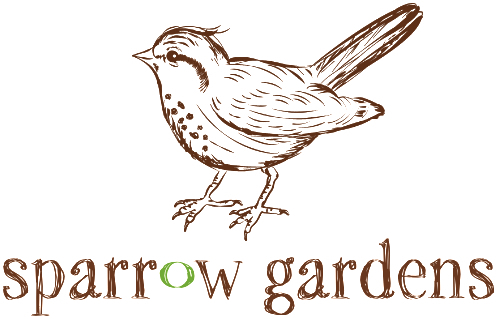 hellebores, harbingers of spring — sparrow gardens.
