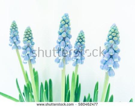 Harbinger Of Spring Imágenes pagas y sin cargo, y vectores en.