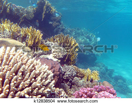 Stock Photo of colorful coral reef with hard corals at the bottom.
