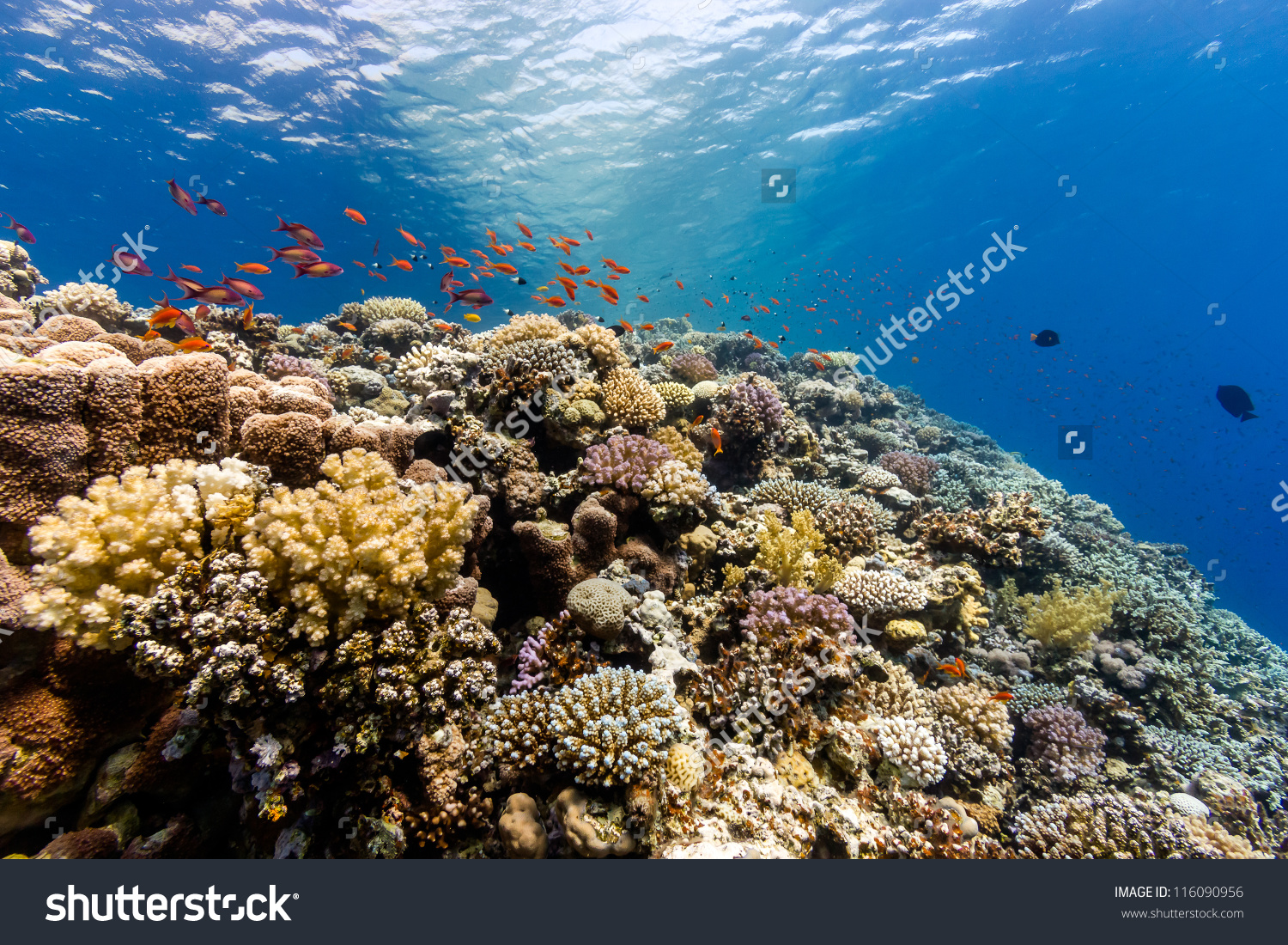 Thrivinghealthy Coral Reef Covered Hard Corals Stock Photo.