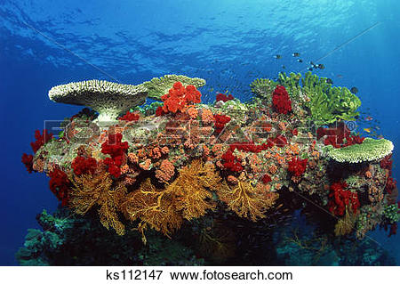 Picture of Reef scenic: hard corals, soft corals and tropical fish.