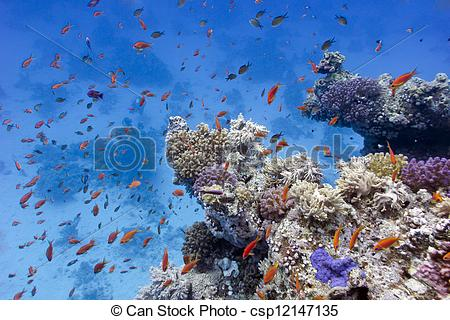 Stock Photos of coral reef with soft and hard corals on the bottom.